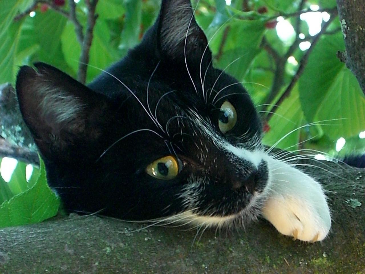 Liloo (Oct 2007 - July 2010) R.I.P.